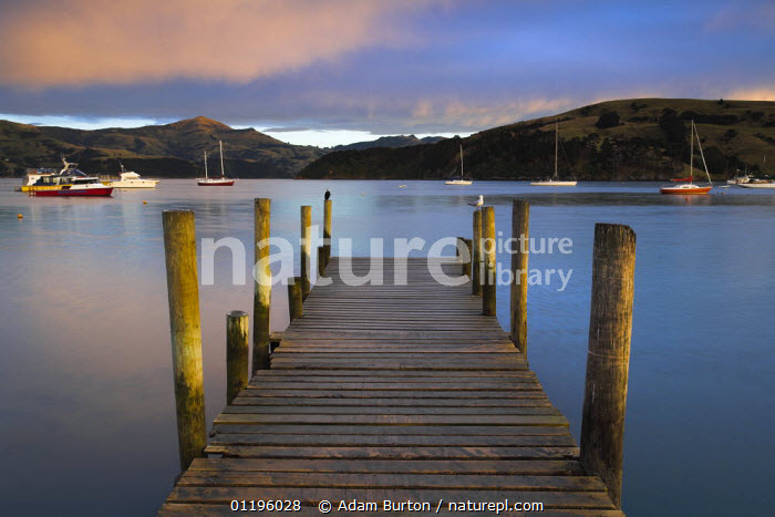 Early morning at Akaroa harbour, Canterbury, South Island, New Zealand  ,  AUSTRALASIA,BOATS,JETTIES,LAKES,LANDSCAPES,NEW ZEALAND,NP,PEACEFUL,PIERS,RESERVE,SUNSET,YACHTS,Concepts,National Park  ,  Adam Burton