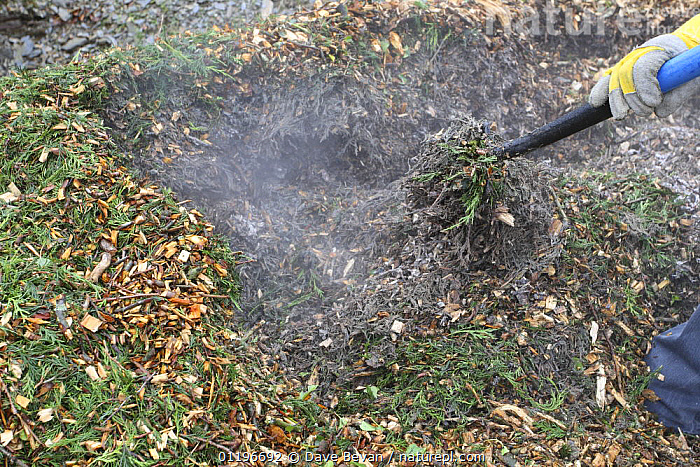 Turning a compost heap for commercially chipped tree branches, UK, model released  ,  COMPOSTING,EUROPE,GARDENS,PEOPLE,PLANTS,RECYCLING,UK,United Kingdom,British, United Kingdom  ,  Dave Bevan