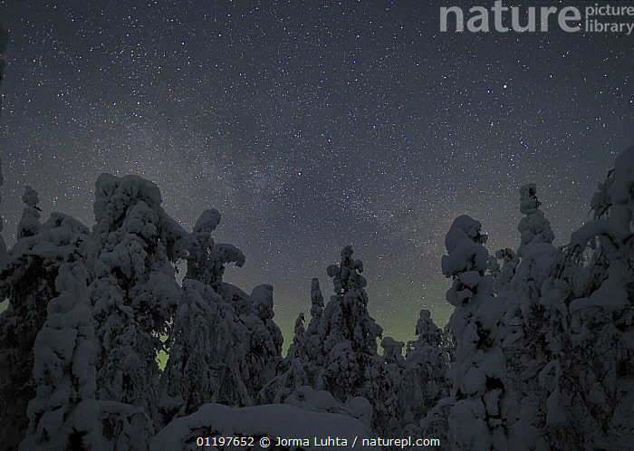 Cold winter night with snow laden pine trees and a small aurora, North Finland, 2006  ,  EUROPE,FINLAND,LANDSCAPES,NIGHT,SCANDINAVIA,SKY,TREES,Plants, Europe, Europe, Europe, Europe  ,  Jorma Luhta