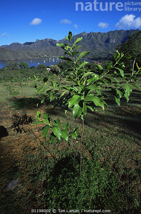 Nature Picture Library - Garden for the cultivation of