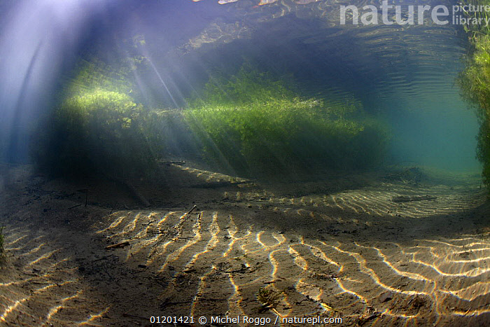 Underwater landscape in mountain creek, Swiss Alps, Gruy�re, Fribourg, Switzerland, January, ALGAE,ALPINE,AQUATIC,ATMOSPHERIC,COLOURFUL,EUROPE,FRESHWATER,LANDSCAPES,PATTERNS,RAYS,RIVERS,SUN,SURFACE,TEMPERATE,UNDERWATER,WINTER,Plants,Catalogue1, Michel Roggo