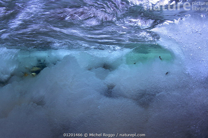 Underwater landscape in Hongrin River with ice on the river bed and surface in winter. Fribourg, Gruy�re, Switzerland, December, ABSTRACT,AQUATIC,EUROPE,FRESHWATER,GRUYERE,ICE,LANDSCAPES,RIVERBED,RIVERS,SURFACE,TEMPERATE,TURBULENCE,TURBULENT,UNDERWATER,WINTER, Michel Roggo
