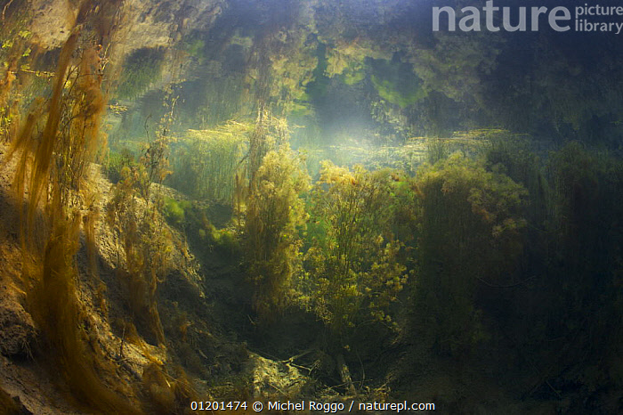 Underwater landscape in Spring creek, Saane river tributary, in winter, Gruy�re, Fribourg, Switzerland. February, ALGAE,AQUATIC,EUROPE,FLOATING,FRESHWATER,GRUYERE,LANDSCAPES,PLANTS,REFLECTIONS,RIVERS,SURFACE,TEMPERATE,UNDERWATER,WINTER, Michel Roggo