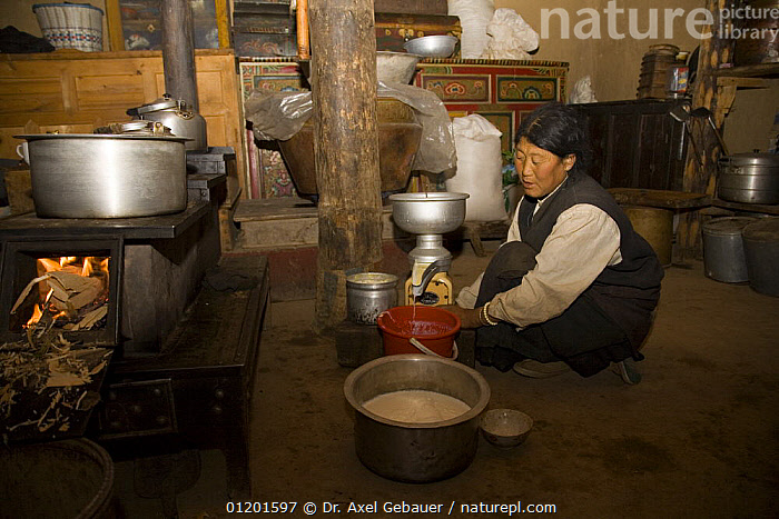 Woman producing butter in Dargye, Sichuan, Kham / Sichuan, Tibet, China, ASIA,DAIRY,FOOD,INDOORS,MAKING,MILK,PEOPLE,TRADITIONAL,CHINA, Dr. Axel Gebauer