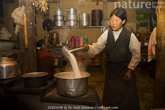 Woman producing butter in Dargye, Sichuan, Kham / Sichuan, Tibet, China, ASIA,DAIRY,FOOD,INDOORS,PEOPLE,TRADITIONAL,CHINA, Dr. Axel Gebauer