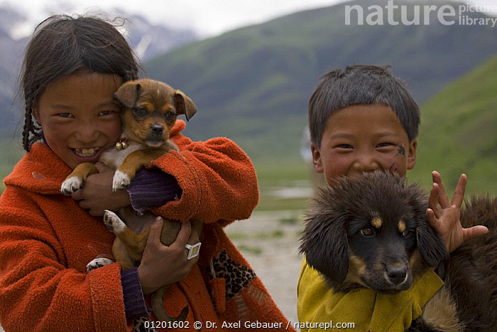 Tibetan children holding puppy and dog, Ganzi-Yushu, Sichuan Province, China, ASIA,BABIES,CANIS,CHILDREN,CHINA,DOGS,FAMILIARIS,HAPPY,MIXED BREED,PEOPLE,PETS,PORTRAITS,PUPPIES,TWO, Dr. Axel Gebauer