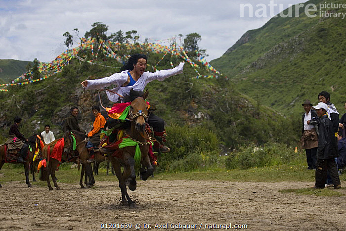 Horse festival at Holy hill near Dargye, Sichuan Province, China, Tibet. Part of the Biodiversity hotspot �Southeast China mountains�, ASIA,BIODIVERSITY,CELEBRATIONS,CHINA,CULTURE,DECORATED,FLAGS,HORSES,INTERESTING,KHAM,LANDSCAPES,MOUNTAINS,PEOPLE,RELIGION,TIBET,TRADITIONAL, Dr. Axel Gebauer