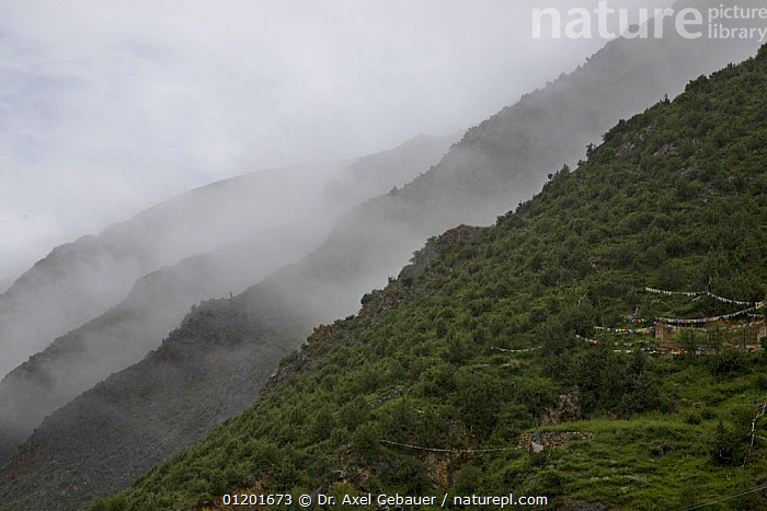 Holy hill near Dargye, Sichuan Province, China, Tibet, Kham, China, Biodiversity hotspot  of Southeast China mountains, ASIA,ATMOSPHERIC,BIODIVERSITY,CHINA,FORESTS,LANDSCAPES,MIST,MOUNTAINS,TIBET,WEATHER,WOODLANDS, Dr. Axel Gebauer