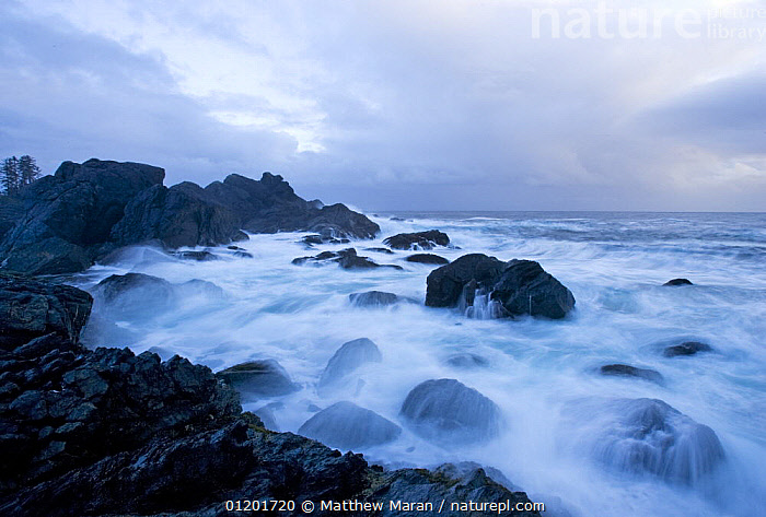 Rocky coast on the Pacific Ocean viewed from The Wild Pacific Trail, Vancouver Island, BC, Canada, CANADA,COASTS,LANDSCAPES,ROCKS,SEA,North America, Matthew Maran