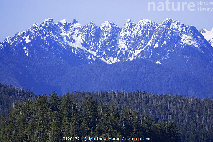 Saw Tooth Mountain Range, Vancouver Island, BC, Canada, CANADA,FORESTS,LANDSCAPES,MOUNTAINS,ROCKIES,ROCKY MOUNTAINS,SNOW,North America, Matthew Maran