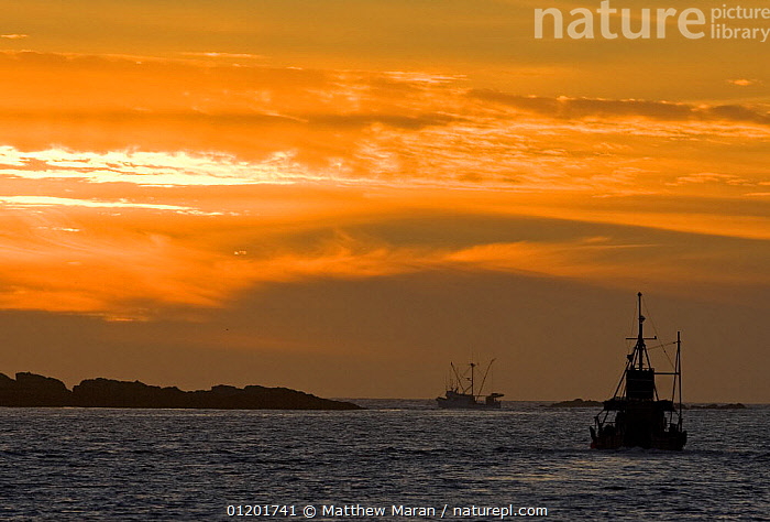 Long line fishing boats at dusk fishing for Pacific halibut, Barkley Sound, Vancouver Island, BC, Canada, BOATS,CANADA,COASTS,LANDSCAPES,PACIFIC,SUNSET,North America, Matthew Maran