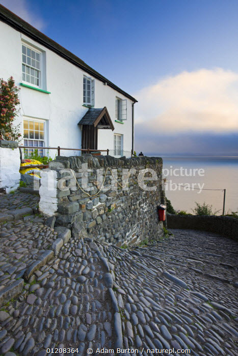 Steep, winding cobbled lane and whitewashed cottage in Clovelly, Devon, England, BUILDINGS,COASTS,COBBLES,EUROPE,FISHING VILLAGES ,HOUSES,LANDSCAPES,STEPS,TRADITIONAL,UK,VERTICAL,VILLAGES,United Kingdom,British,ENGLAND, United Kingdom, United Kingdom, Adam Burton