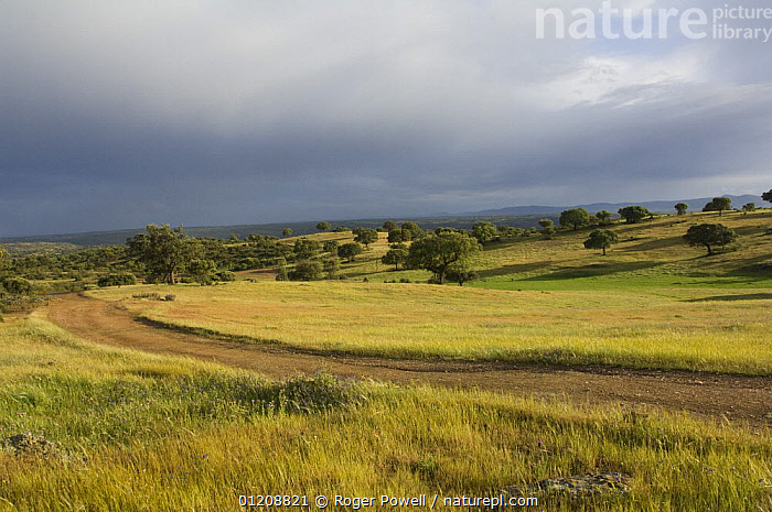 Rainstorm above old track leading into dehesa landscape, nr. Castelo Branco, Portugal  ,  CLOUDS,EUROPE,LANDSCAPES,PATHS,PORTUGAL,STORMS,Weather  ,  Roger Powell