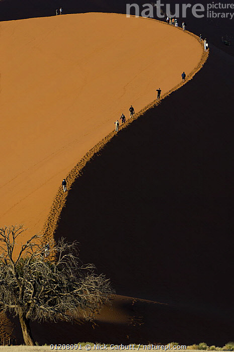 Tourists climbing giant sand dunes (dune 45) at Sossusvlei, Namib Desert, Namibia. July 2008.  ,  ARTY,CURVE,DRAMATIC,HIKING,PATHS,PEOPLE,RESERVE,SAND DUNES,SHADOW,SOUTHERN AFRICA,TOURISM,Deserts,Catalogue1  ,  Nick Garbutt