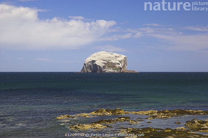Bass Rock covered in nesting seabirds, viewed from the coast of North Berwick, Scotland  ,  BIRDS,COASTS,colonies,colony,EUROPE,ISLANDS,LANDSCAPES,ROCKS,UK, United Kingdom, United Kingdom, United Kingdom, United Kingdom, United Kingdom, United Kingdom  ,  Peter Lewis