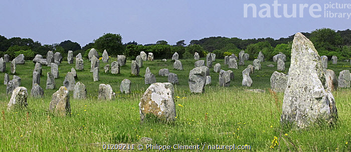 Standing stones in the M�nec alignment at Carnac, Brittany, France. May 2008.  ,  ANCIENT,CIRCLES,EUROPE,FRANCE,LANDSCAPES,PANORAMIC,STONE  ,  Philippe Clement