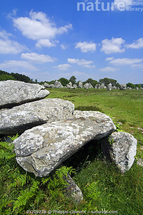 Dolmen and standing stones in the Kermario alignment at Carnac, Brittany, France. May 2008.  ,  ANCIENT,BURIAL SITE,EUROPE,FRANCE,LANDSCAPES,STONE  ,  Philippe Clement