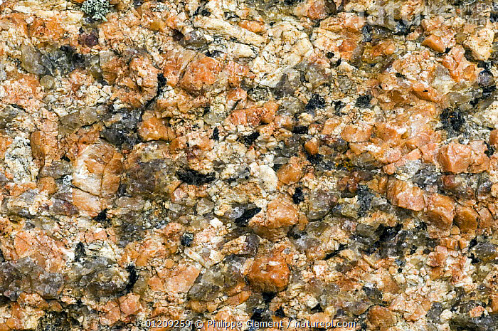 Close up of rock structure of the famous pink granite at Ploumanac'h, Brittany, France  ,  CLOSE UPS,COLOURFUL,EUROPE,FRANCE,LANDSCAPES,MINERALS,ORANGE,PATTERNS,ROCKS  ,  Philippe Clement