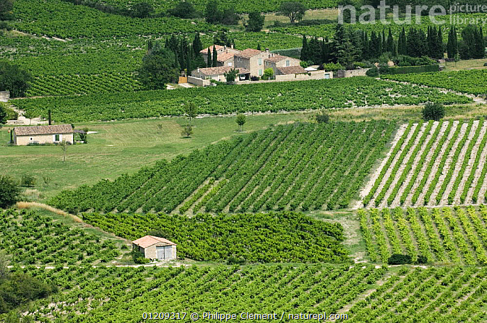 Vineyards in the Vaucluse, Provence, France. June 2008.  ,  AGRICULTURE,BUILDINGS,CROPS,EUROPE,FRANCE,GRAPES,LANDSCAPES,PATTERNS,VINES,VINEYARD  ,  Philippe Clement