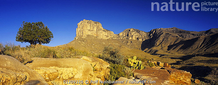 Sunrise on El Capitan, Guadalupe Mountains National Park, Texas, USA, November 2005  ,  DAWN,DESERTS,LANDSCAPES,NP,PANORAMIC,RESERVE,ROCKS,SUNRISE,USA,North America,National Park  ,  Rolf Nussbaumer