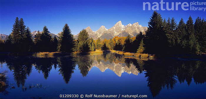 Teton mountains reflected in lake, Schwabacher Landing, Grand Teton NP, Wyoming, September 2005  ,  AUTUMN,BLUE,LAKES,LANDSCAPES,MOUNTAINS,REFLECTIONS,RESERVE,TREES,USA,WATER,North America,Plants ,Rocky Mountains,  ,  Rolf Nussbaumer