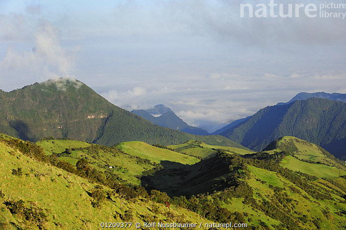 View from east slopes of Pichincha Volcano, Quito, Ecuador, Andes, South America, January 2008  ,  ANDES,LANDSCAPES,MOUNTAINS,RESERVE,SOUTH AMERICA  ,  Rolf Nussbaumer