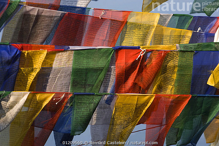 Buddhist prayer flags, Kalimpong, West Bengal, India October 2007  ,  ASIA,BUDDHISM,BUDDHIST,COLOURFUL,INDIA,TRADITIONAL,WIND,Weather  ,  Bernard Castelein