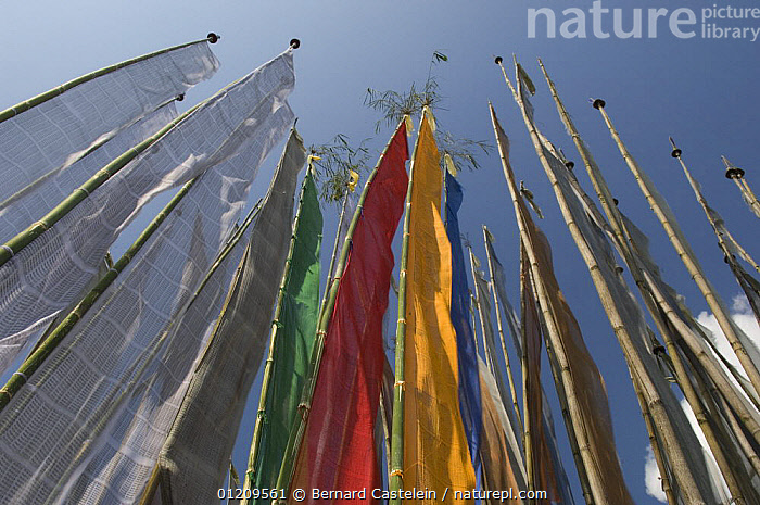 Buddhist prayer flags, Kalimpong, West Bengal, India October 2007  ,  ARTY,ASIA,BUDDHISM,BUDDHIST,COLOURFUL,INDIA,LOW ANGLE SHOT,TRADITIONAL  ,  Bernard Castelein