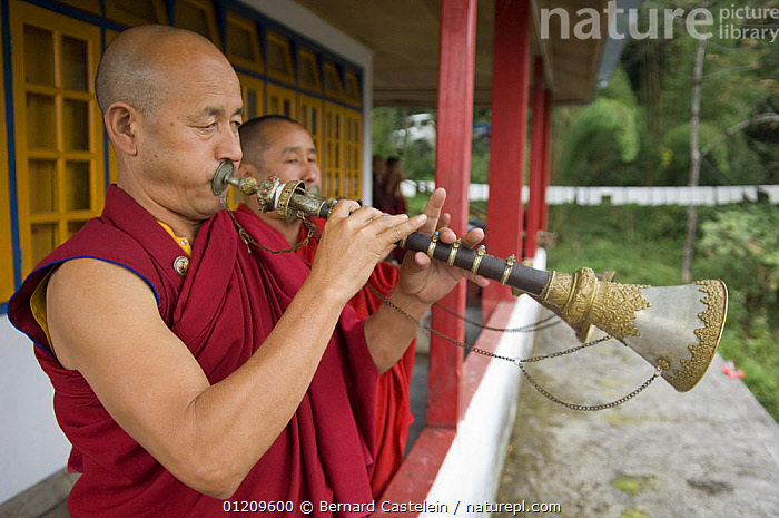 Buddhist monks playing short trumpets after Puja in Phodong Monastery, Phodong, Sikkim, India October 2007  ,  ASIA,BUDDHISM,BUDDHIST,BUILDINGS,INDIA,INSTRUMENTS,LANDSCAPES,MEN,MONK,MUSIC,PEOPLE,TRADITIONAL,TRUMPET  ,  Bernard Castelein