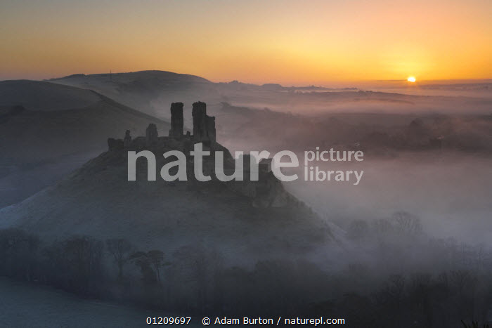 Mist surrounds the ruins of Corfe Castle at sunrise, Dorset, England *Not available for use on 2013 retail calendars in Germany, Austria and Switzerland. *Not available for greeting card use worldwide until July 2014.  ,  ATMOSPHERIC,BUILDINGS,CASTLES,DAWN,ENGLAND,EUROPE,LANDSCAPES,MIST,SUNRISE,UK,United Kingdom,British,WEATHER , United Kingdom, United Kingdom  ,  Adam Burton