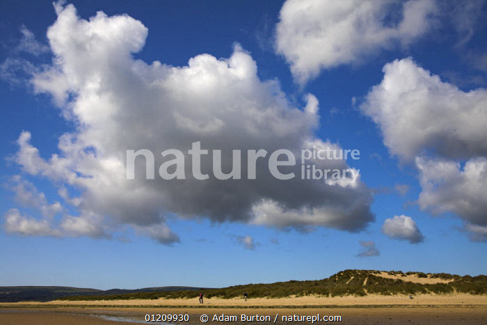 Nature Picture Library - Summer day on the sand dunes of Studland