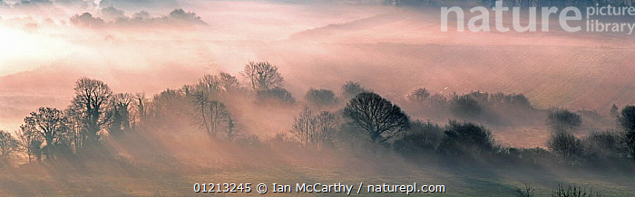 Wooded landscape with thick mist at dawn, Ireland  ,  ATMOSPHERIC,EUROPE,IRELAND,LANDSCAPES,PANORAMIC,SUNRISE  ,  Ian McCarthy