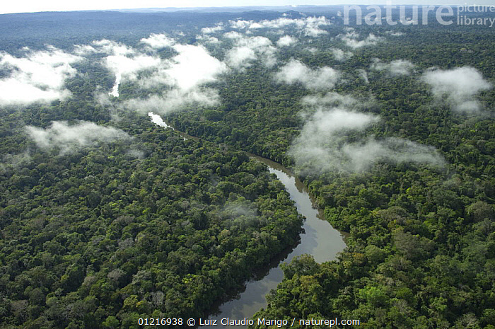 Nature Picture Library Aerial View Of Aripuan River And