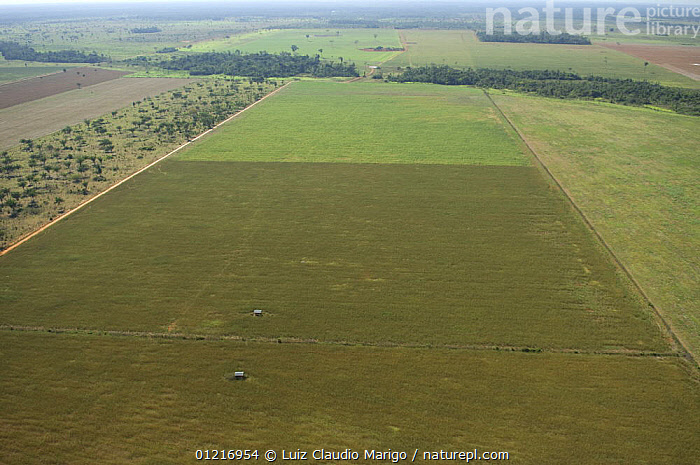 Aerial view of Soya bean plantation created by deforestation of rainforest, Western Mato Grosso State, Western Brazil.  ,  AERIALS,AGRICULTURE,AMAZONIA,CROPS,LANDSCAPES,SOUTH AMERICA,TROPICAL RAINFOREST,SOUTH-AMERICA  ,  Luiz Claudio Marigo