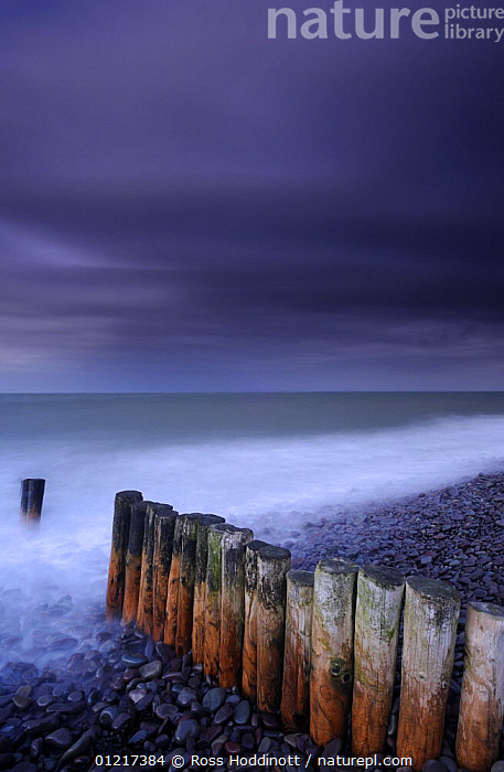 Weathered groyne, pebbles and stormy evening sky at Bossington beach, Exmoor National Park, Somerset, UK. October 2008., BEACHES,COASTS,DARK,EUROPE,LANDSCAPES,SEA,SEATHER,STORM,UK,VERTICAL,UNITED KINGDOM,BRITISH,ENGLAND, United Kingdom, United Kingdom, United Kingdom, United Kingdom, United Kingdom,Catalogue1, Ross Hoddinott