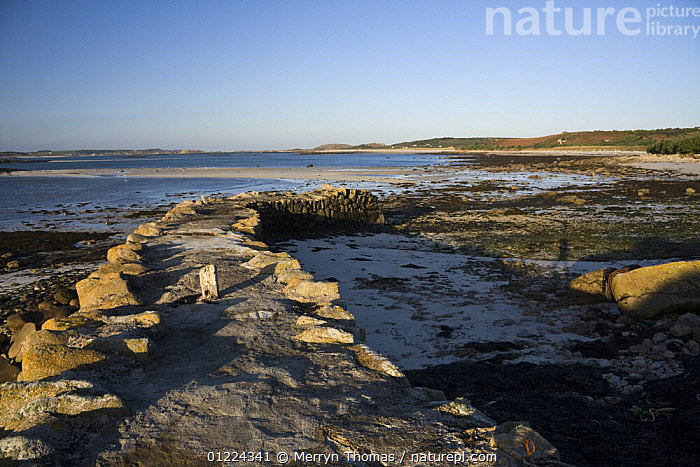 Old Quay Beach, Higher Town, St. Martin's, Isles of Scilly. December 2008.  ,  BEACHES,COASTS,CORNWALL,ENGLAND,EUROPE,LANDSCAPES,LITTORAL,LOW TIDE,MOORING PILES,QUAYS,SAINT MARTINS,STONE,UK, United Kingdom, United Kingdom, United Kingdom  ,  Merryn Thomas