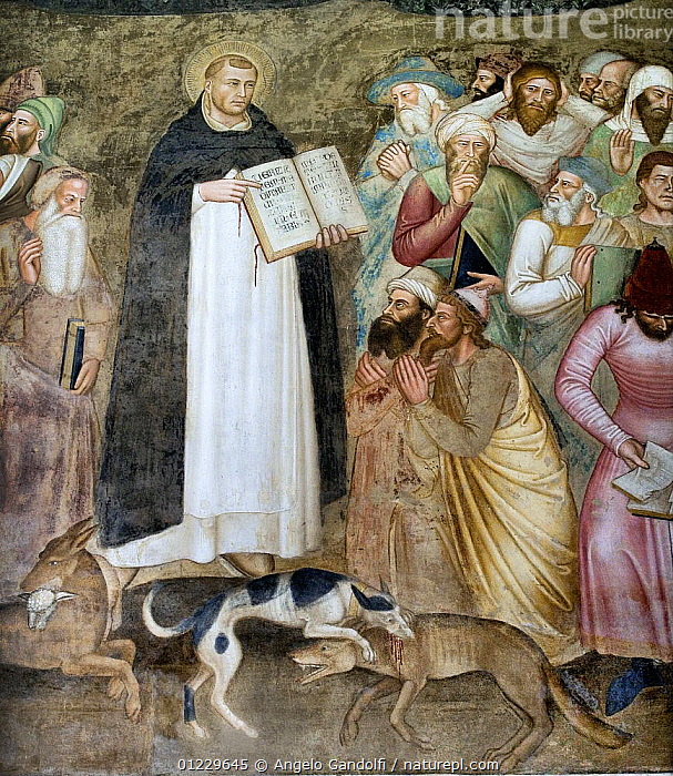 """A detail from """"The Triumph of the Dominicans"""", a fresco by Andrea di Buonaiuto (Florence, Italy). The """"dogs of God"""" (domine-cani) destroy the wolves, symbol of heresy., ANIMALS IN ART,ART,DOG,EUROPE,PEOPLE,WOLF, Angelo Gandolfi"""
