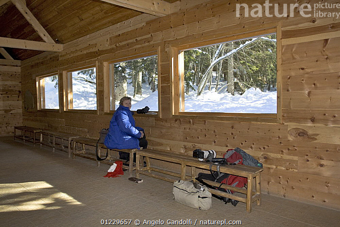 Visitor in the wolf watching shed at Alpha Park, Parc National du Mercantour, Alps, Southern France, BUILDINGS,CANIDS,CARNIVORES,EUROPE,FRANCE,INDOORS,MAMMALS,NP,PEOPLE,PHOTOGRAPHY,RESERVE,SNOW,VERTEBRATES,WOLVES,National Park, Angelo Gandolfi