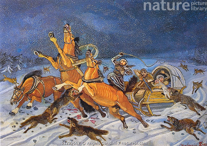 A typical fantasy image of a wolf attack in Russia, ANIMALS IN ART,ART,EUROPE,HORSES,PAINTINGS,PEOPLE,RUSSIA,SNOW,WINTER,WOLVES, Angelo Gandolfi
