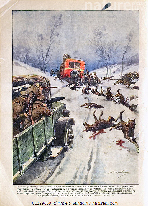 """Fantasy wolf attack according to the Italian Magazine """"Domenica del Corriere"""", January 3rd 1937. An incredible wolf pack attacked a bus and only the army could prevent all the people from being devoured., ANIMALS IN ART,DEATH,EUROPE,GUNS,ITALY,PAINTINGS,PEOPLE,ROADS,SNOW,VEHICLES,VERTICAL,WINTER,WOLVES, Angelo Gandolfi"""