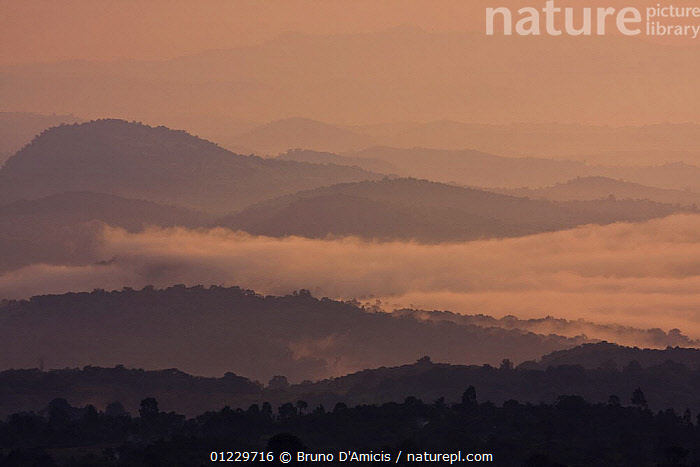 Cloud forest and the landscape surrounding Bonga town at dawn, Kaffa Zone, Southern Ethiopia, East Africa December 2008, AFRICA,ATMOSPHERIC,CLOUD FOREST,DAWN,EAST AFRICA,FORESTS,LANDSCAPES,MIST,ORANGE,TREES,PLANTS, Bruno D'Amicis