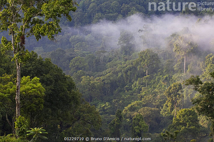 Afromontane cloud forest, Boginda, Kaffa Zone, Southern Ethiopia, East Africa December 2008, AFRICA,CLOUD FOREST,CLOUDS,EAST AFRICA,FORESTS,LANDSCAPES,TREES,Weather,PLANTS, Bruno D'Amicis