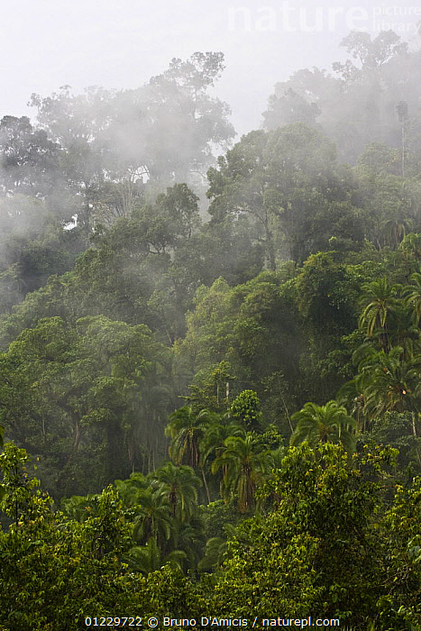 Dense vegetation in old-growth Afromontane cloud forest, Mankira, Kaffa Zone, Southern Ethiopia, East Africa December 2008, AFRICA,CLOUD FOREST,CLOUDS,EAST AFRICA,FORESTS,LANDSCAPES,MIST,TREES,VERTICAL,Weather,PLANTS, Bruno D'Amicis