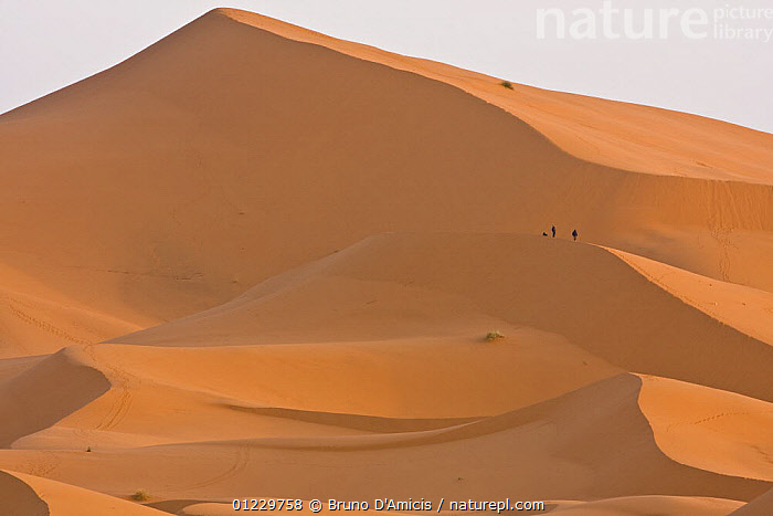 People on dune in the Sahara desert at dawn, Merzouga, Erg Chebbi, Southern Morocco, NW Africa December 2008, AFRICA,DAWN,DESERTS,LANDSCAPES,NORTH AFRICA,ORANGE,PEOPLE,SAND DUNES, Bruno D'Amicis