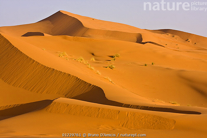 Dunes in the Sahara desert, Merzouga, Erg Chebbi, Southern Morocco, NW Africa, AFRICA,DESERTS,LANDSCAPES,NORTH AFRICA,ORANGE,SAND DUNES, Bruno D'Amicis