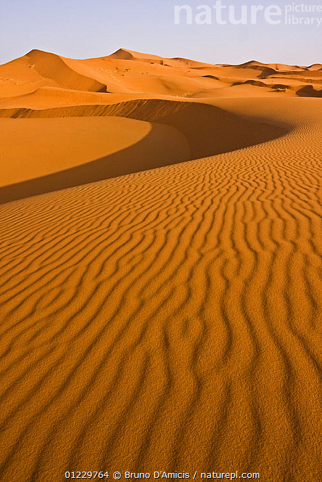 Dunes in the Sahara desert, Merzouga, Erg Chebbi, Southern Morocco, NW Africa, AFRICA,DESERTS,LANDSCAPES,NORTH AFRICA,ORANGE,PATTERNS,SAND DUNES,VERTICAL, Bruno D'Amicis