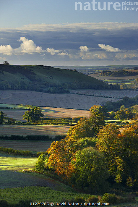 Countryside at dawn with autumn colours near Cerne Abbas, Dorset, England, UK, October 2008, COUNTRYSIDE,DAWN,EUROPE,FARMLAND,LANDSCAPES,PEACEFUL,SUNRISE,VERTICAL,Concepts, United Kingdom, David Noton
