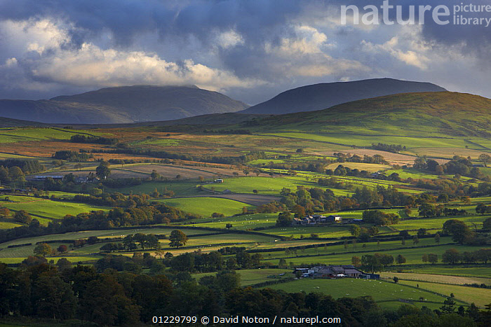 Rolling farmland on the edge of Snowdonia National Park, nr Ysbyty Ifan, County Conwy, North Wales, UK, October 2008, CONWAY,COUNTRYSIDE,EUROPE,FARMLAND,FIELDS,LANDSCAPES,WALES, United Kingdom, David Noton