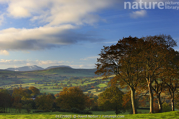Rolling farmland on the edge of Snowdonia National Park, nr Ysbyty Ifan, County Conway, North Wales, October 2008, CONWAY,COUNTRYSIDE,EUROPE,EXTENSIVE,FARMLAND,LANDSCAPES,UK,WALES, United Kingdom, David Noton