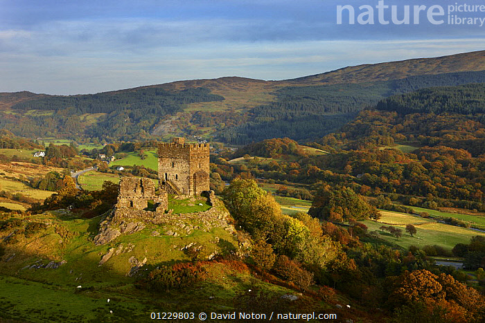 Dolwyddelan Castle, Dolwyddelan, nr Betws y Coed, Snowdonia National Park, Conwy, North Wales, UK, October 2008, BUILDINGS,CASTLES,COUNTRYSIDE,EUROPE,LANDSCAPES,RUINS,UK,WALES, United Kingdom, United Kingdom, United Kingdom, David Noton
